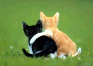 Barátok